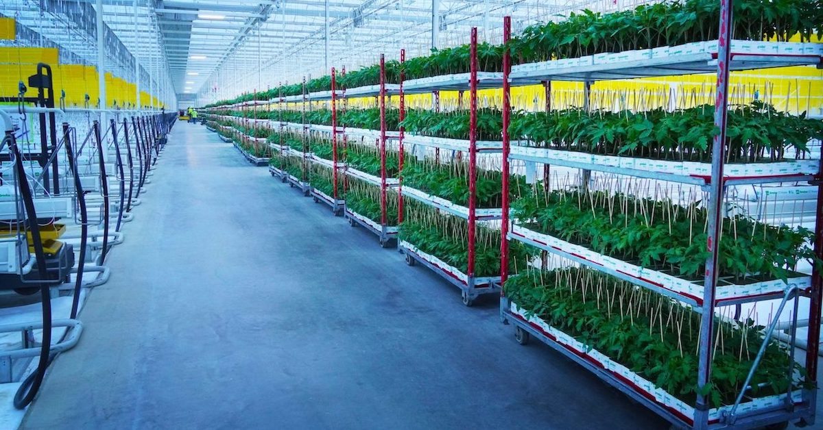 AppHarvest-Morehead-facility_featured