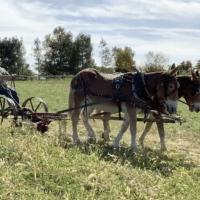 Wendell Berry Farming Program graduates its inaugural class