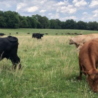 The 'beef' with beef: Cattle, climate change and alternative meat