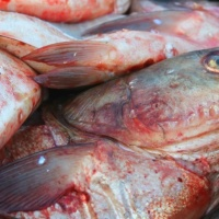 Preliminary results show 'fish fence' helping to block Asian carp