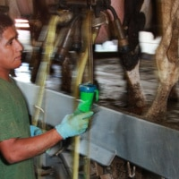 New booklets aim to improve youth safety on the farm